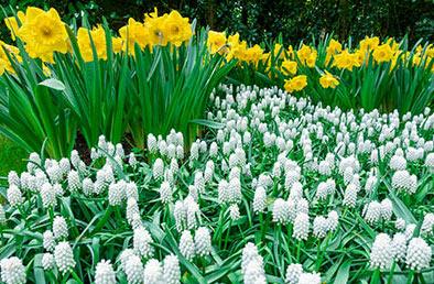 Gardening Solutions