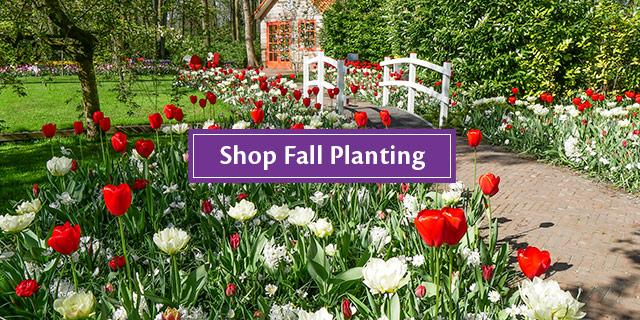Shop Fall Planting