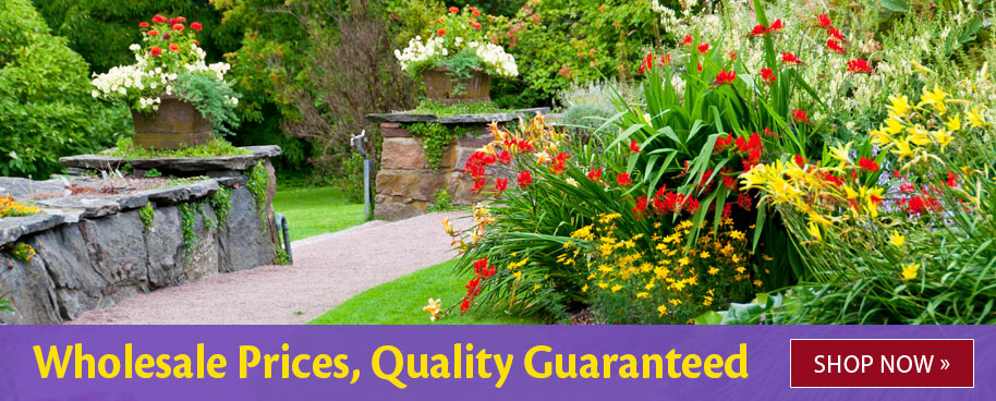 Wholesale Prices, Quality guaranteed