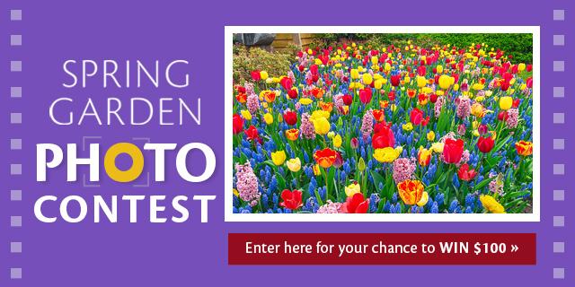KVB Spring Garden photo contest