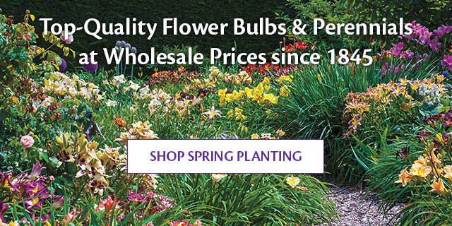 Shop Spring Planting