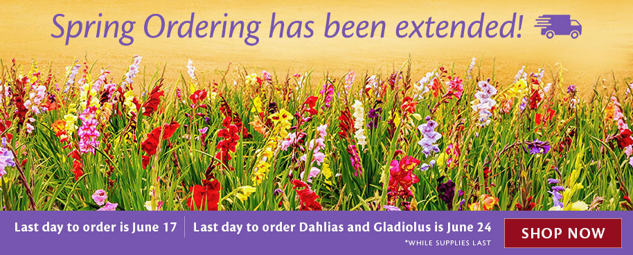 Spring Shipping Extended