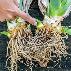 Dormant Plants 3