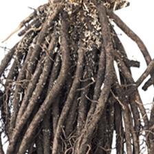 Dormant Perennials 3