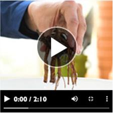 Dormant Perennials video