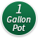 One Gallon Pot