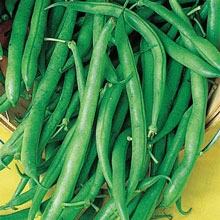 Blue Lake Pole Beans