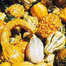 Large and Small Mix Gourds