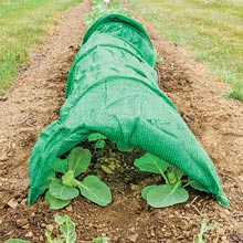 Pest Netting Tunnel