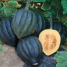 Black Bellota Hybrid Winter Squash