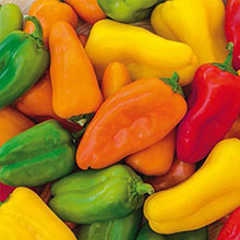 Yum Yums Hybrid Mixed Mini Bells Sweet Pepper