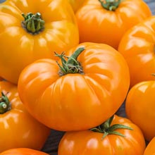 Gurney's® Orange Whopper Hybrid Tomato
