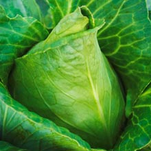 Sweetheart Lettage® Hybrid Tender Leaf Cabbage™