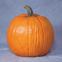 Gurney's® Giant Magic Hybrid Pumpkin