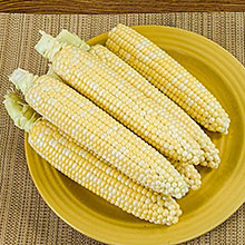 That's Delicious! Hybrid (sh2) Sweet Corn