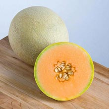 Sarah's Choice Hybrid Melon