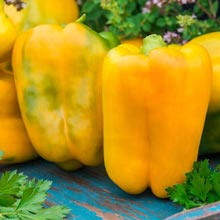 Mega Gold Hybrid Sweet Pepper
