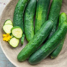 Americana Slicing Hybrid Cucumber