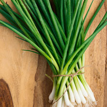 Evergreen White Bunching Onion