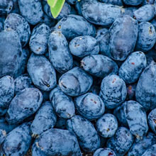 Early Blue Honeyberry