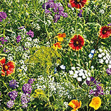 Gurney's® Beneficial Bug Wildflower Mix