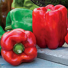 Gurney's® Giant II Hybrid Sweet Pepper