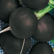 Black Spanish Round Summer Radish