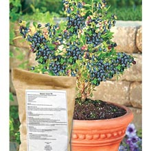 Gurney's® Blueberry Success Mix