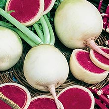 Watermelon Winter Radish