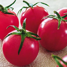 Sweet Treats (FFT) Hybrid Tomato