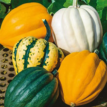 Autumn Acorn Winter Squash Blend