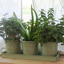 Windowsill Herb Pots