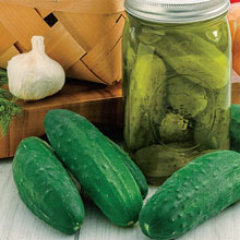 Gurney's® Perfect Pickle Hybrid Pickling Cucumber