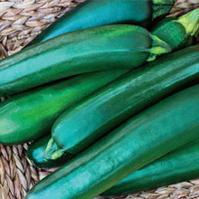 Gurney's® Pride Improved Zucchini Hybrid Summer Squash
