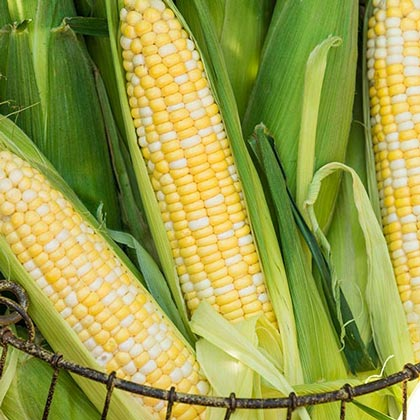 Gotta Have It<sup>&reg;</sup> Hybrid Sweet Corn