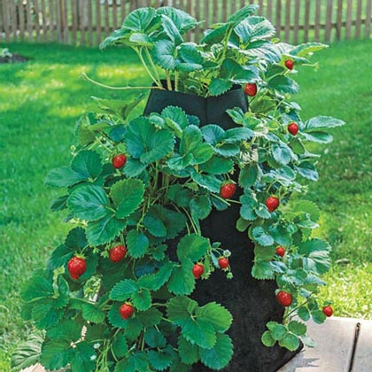 Grow Tub<sup>®</sup> Strawberry Tower™