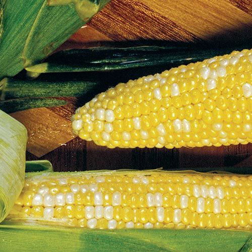 Cameo Hybrid Bicolor (Sy) Sweet Corn