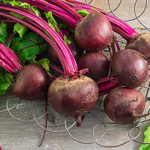 Perfected Detroit Beet