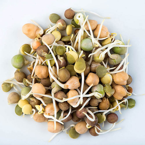 Organic Crunchy Bean Sprouts Mix