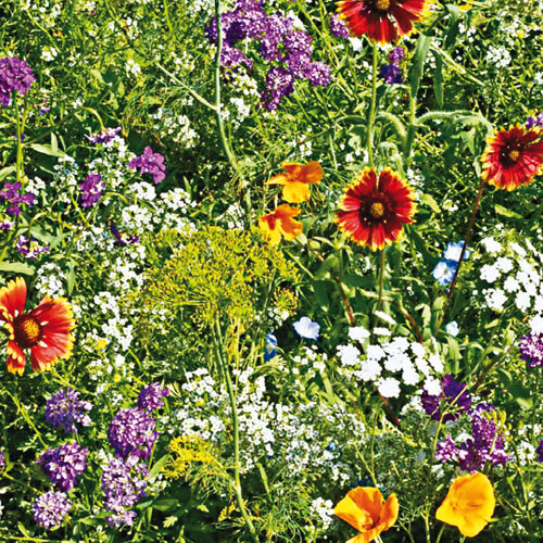 Gurney's® Beneficial Bug Mix
