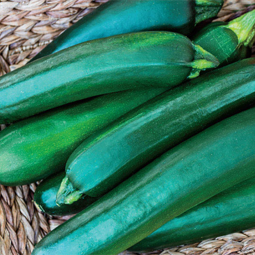Gurney's® Pride Improved Hybrid Zucchini Summer Squash