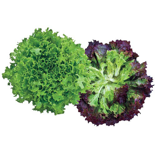 Multileaf Mix Lettuce