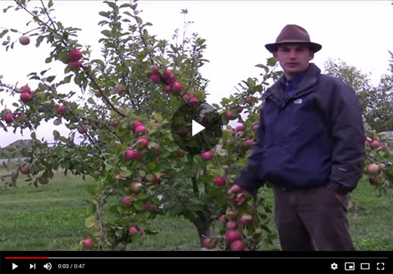 Benefits of Fruit Thinning Video