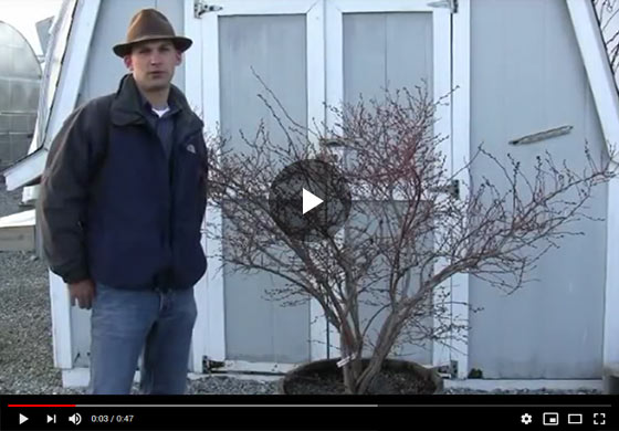 How to Grow Blueberry Plants in a Container Video