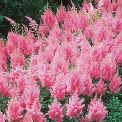Pink Astilbe Super Bag