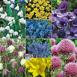 Buy pre planned gardens at michigan bulb quick viewopens a dialog bee and butterfly garden collection ccuart Images