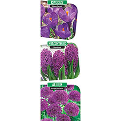Purple Lasagna Planting Mix