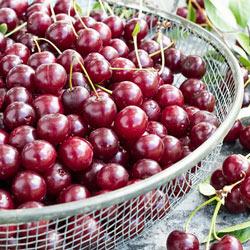 Cherry Dwarf Juliet™