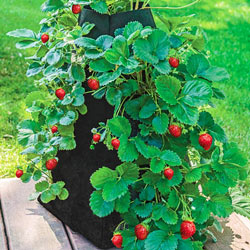 Grow Tub™ Strawberry Tower™