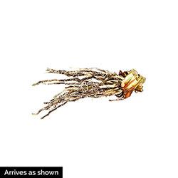 Paprikash Siberian Iris